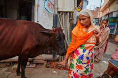 Vrindavan, 22 October 2016: Indian woman escaping from cow on th Royalty Free Stock Photography