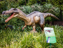 Vråla det Baryonyx anseendet i högväxt grässkärm modellera i Perth Z Royaltyfri Foto