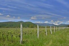 Vårlandskap nära Cividale del Friuli Royaltyfri Bild