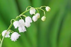 värld för vildmark för dal för liljanaturryss Arkivfoto