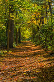 Vroeg Autumn Pathway Royalty-vrije Stock Foto