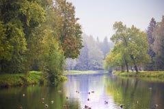 Vroeg de herfst boslandschap Stock Afbeeldingen