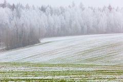 Vroeg de lentelandschap Bomen met rijp Groene heuvels die worden behandeld stock foto