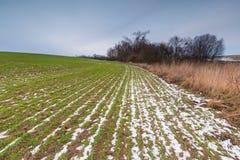 Vroeg de lentelandschap van gebieden onder bewolkte hemel Royalty-vrije Stock Afbeelding