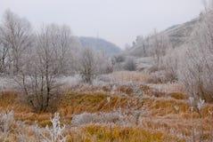 Vroeg de winterlandschap met berijpte installaties en bomen op heuvels Royalty-vrije Stock Afbeeldingen