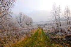 Vroeg de winterlandschap met weg, berijpte installaties en bomen Royalty-vrije Stock Afbeelding