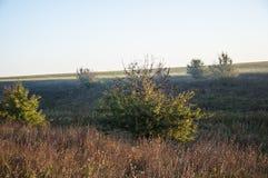 Vroeg ochtend landelijk landschap met mist Royalty-vrije Stock Foto