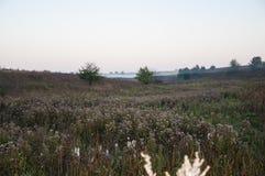 Vroeg ochtend landelijk landschap met mist Stock Afbeelding