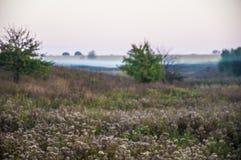 Vroeg ochtend landelijk landschap met mist Royalty-vrije Stock Fotografie