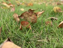 Vroeg ochtendgras met bladeren stock fotografie