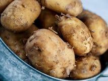 Vroege Aardappels royalty-vrije stock afbeelding