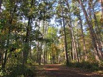Vroege Autumn Dirt Pathway Through Tall-Bomen Stock Foto
