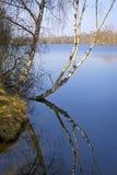 Vroege de lentedag bij het mooie meer Stock Foto's