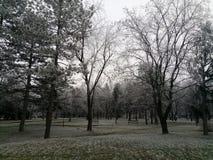 Vroege de winterbomen in park stock afbeelding
