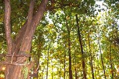 Vroege Gevoerd lang van de de Herfstboom stock foto's