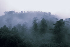 Vroege mist Stock Foto's