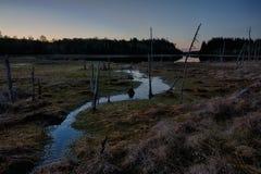 Vroege ochtend bij het moerasmeer Royalty-vrije Stock Afbeelding