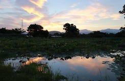 Vroege Ochtend door Lotus Pond Stock Fotografie