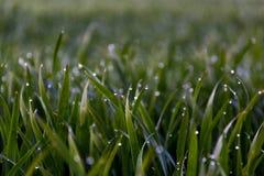 Vroege ochtend, groene gras en dauw stock foto's