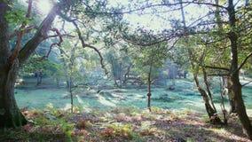 Vroege ochtend in het bos royalty-vrije stock afbeeldingen