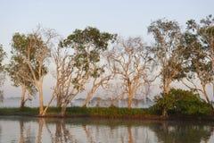 Vroege ochtend op de Gele Rivier, Australië Royalty-vrije Stock Fotografie