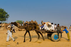 Vroege Ochtendactiviteiten bij Pushkar-Kameelmarkt, Rajasthan, India Stock Afbeeldingen