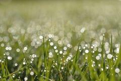 Vroege ochtenddauw op gras Stock Afbeeldingen
