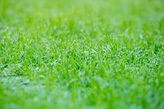 Vroege ochtenddauw op gras abstracte achtergrond met selectieve FO Royalty-vrije Stock Foto
