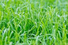 Vroege ochtenddauw op gras abstracte achtergrond met selectieve FO Royalty-vrije Stock Foto's