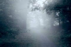 Vroege ochtendmist in bos Stock Foto's