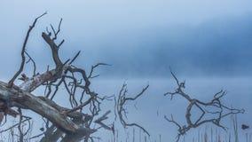 Vroege ochtendmist en mist boven een stil meer in Litouwen stock video