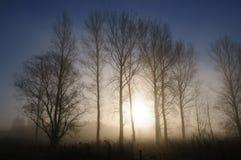 Vroege ochtendmist in oosten-Vlaanderen Royalty-vrije Stock Foto's