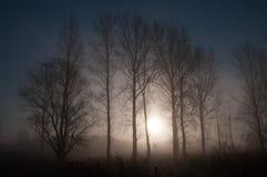 Vroege ochtendmist in oosten-Vlaanderen Royalty-vrije Stock Fotografie