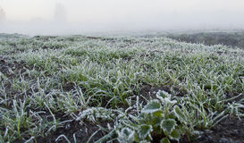 Vroege ochtendmist, vorst op het gebied, op groene installaties, de lenteachtergrond van en Stock Foto