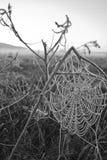 Vroege ochtendmist, vorst op het gebied, op groene installaties, de lenteachtergrond van en, spinnewebben in Stock Foto's