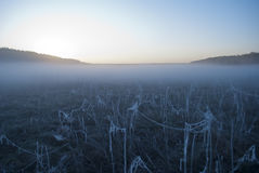 Vroege ochtendmist, vorst op het gebied, op groene installaties, de lenteachtergrond van en, spinnewebben in Stock Foto