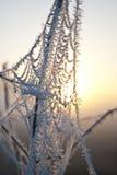 Vroege ochtendmist, vorst op het gebied, op groene installaties, de lenteachtergrond van en, spinnewebben in Stock Fotografie