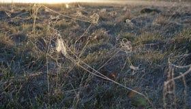 Vroege ochtendmist, vorst op het gebied, op groene installaties, de lenteachtergrond van en, spinnewebben in Royalty-vrije Stock Foto's