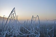 Vroege ochtendmist, vorst op het gebied, op groene installaties, de lenteachtergrond van en, spinnewebben in Stock Afbeeldingen