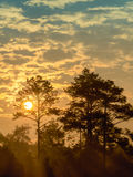 Vroege ochtendzon die onder de bomen glanzen Royalty-vrije Stock Afbeelding