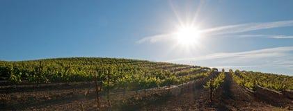 Vroege ochtendzon die op de wijngaarden van Paso Robles in de Centrale Vallei van Californië de V.S. glanzen Royalty-vrije Stock Foto's