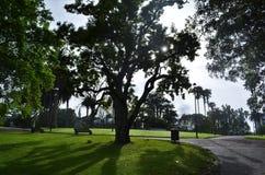 Vroege ochtendzonsopgang in de stadspark van Auckland stock fotografie