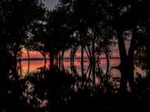 Vroege ochtendzonsopgang door gesilhouetteerde bomen op een meer Stock Afbeeldingen