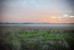 Vroege ochtendzonsopgang met een nevelige mistige paddock Royalty-vrije Stock Foto's