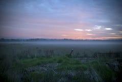 Vroege ochtendzonsopgang met een nevelige mistige paddock Royalty-vrije Stock Fotografie