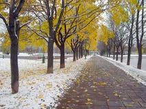 Vroege smeltende sneeuw stock foto's
