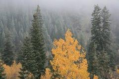 Vroege sneeuw en mist in daling #3 royalty-vrije stock foto's