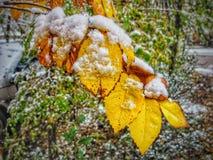 Vroege Sneeuwval in Zuidelijk Colorado Royalty-vrije Stock Afbeeldingen