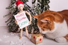 Vrolijk die CATMAS-teken door houten verbonden mannequinpop wordt gehouden die een Santa Claus-hoedenkat dragen die verpakte gift royalty-vrije stock fotografie