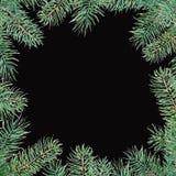 Vrolijk Kerstmispatroon met sparrengrens Waterverf handdrawn illustratie die op zwarte wordt geïsoleerd vector illustratie